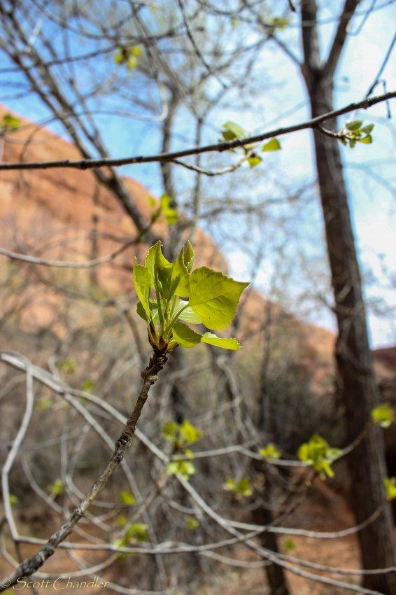 Escalante Spring Break Pt 2-52.jpg