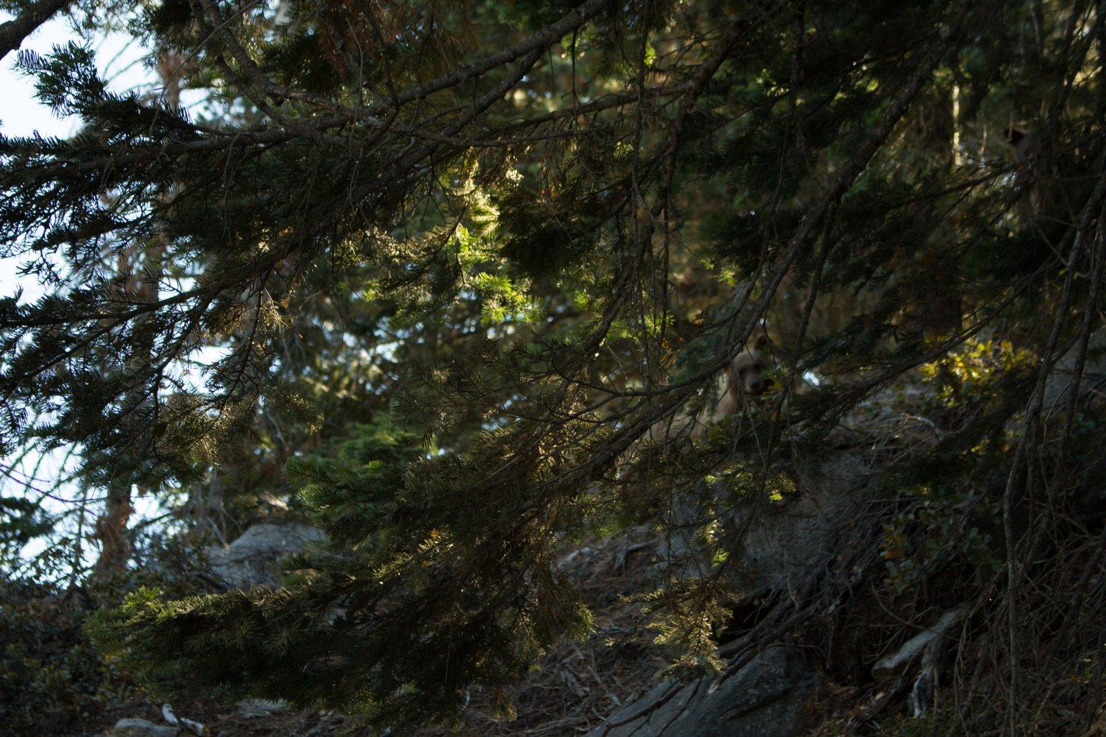 Four Mile Trail-24.jpg