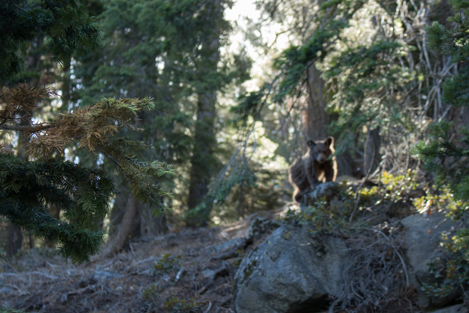 Four Mile Trail-25.jpg