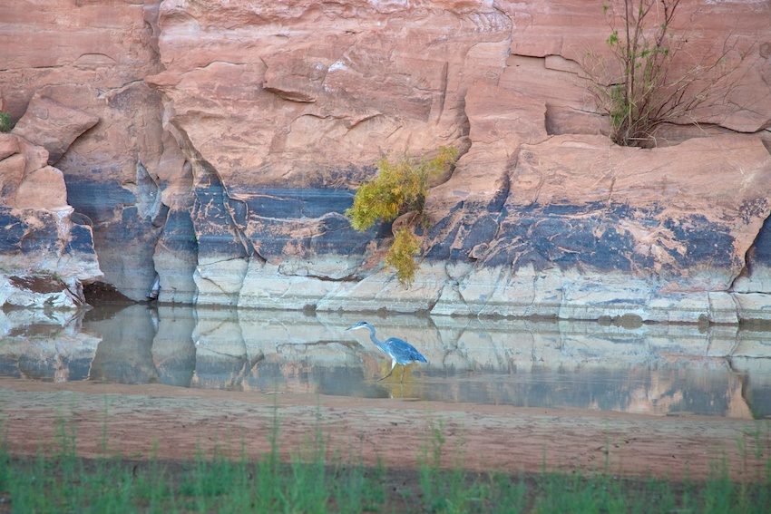 green-river-labyrinth-canyon-25.jpg