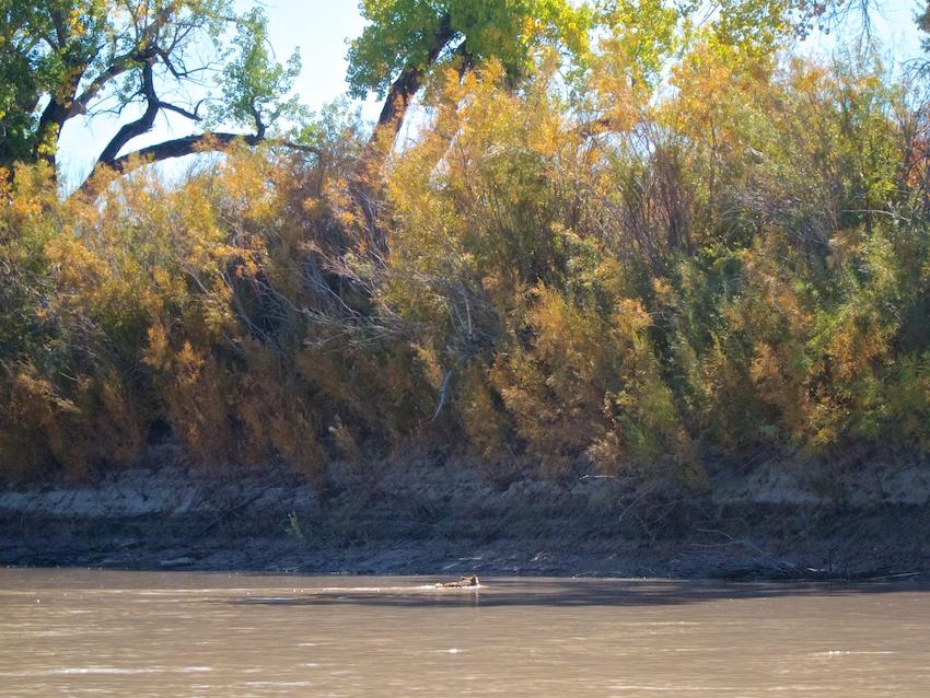 green-river-labyrinth-canyon-3.jpg