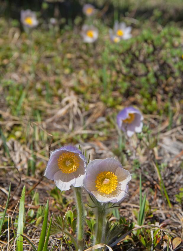 Gunnery-Grass Pass012.jpg