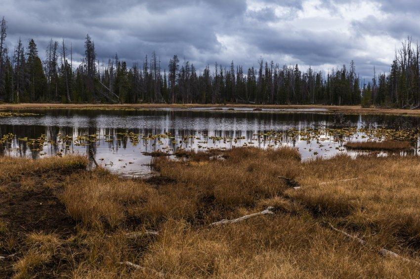 Lily Lakes.jpg