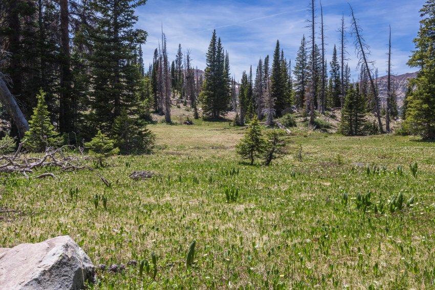 Little meadow.jpg