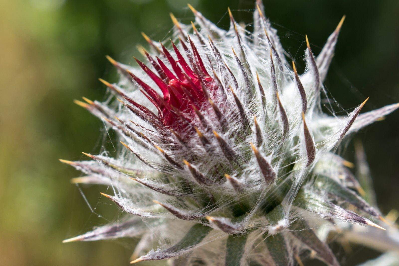 Mendocino National Forest-14.jpg