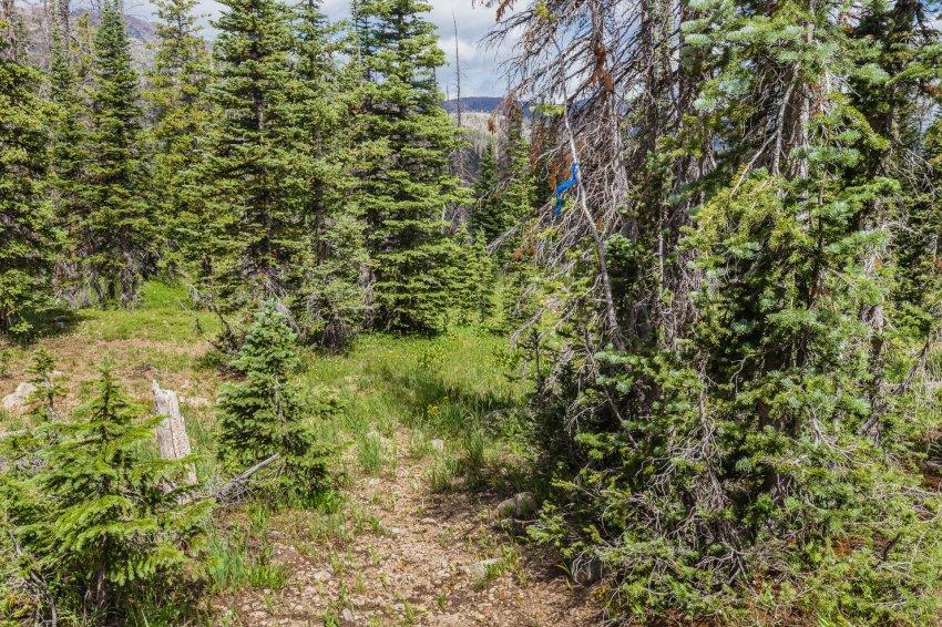 Middle Fork trail flag.jpg