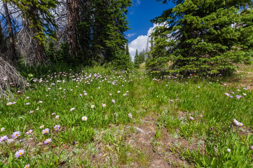 Middle Fork trail.jpg