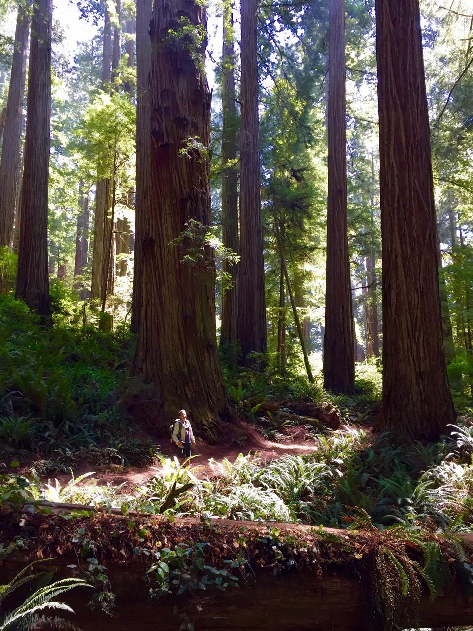 Mill creek-trail-IMG_5038.jpeg