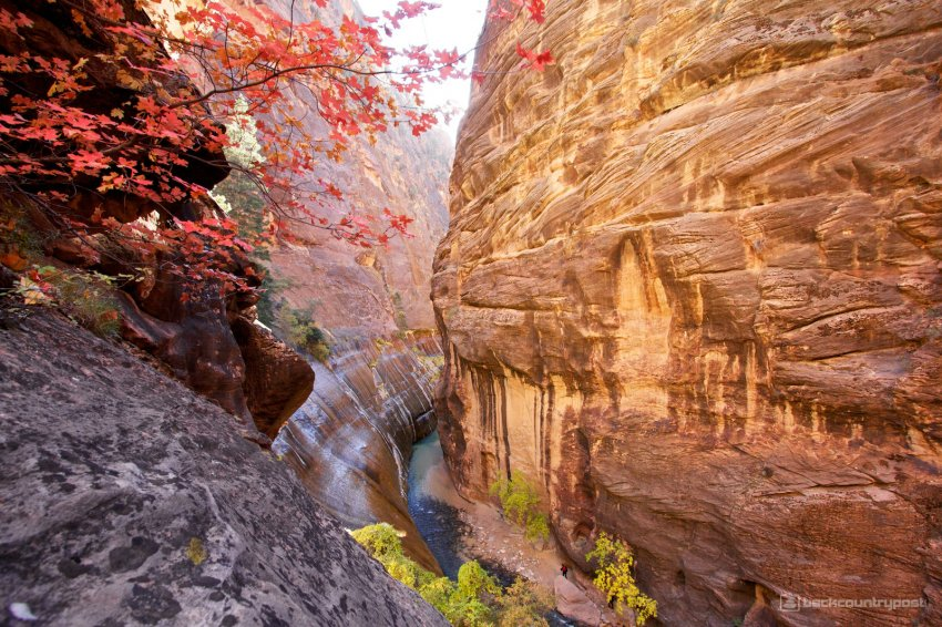mystery-canyon-zion-fall-23.jpg
