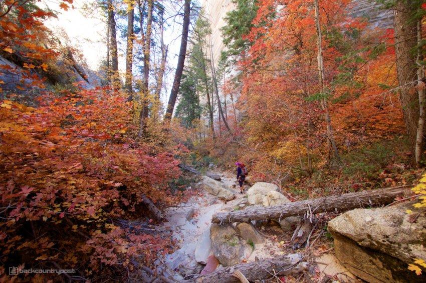 mystery-canyon-zion-fall-5.jpg