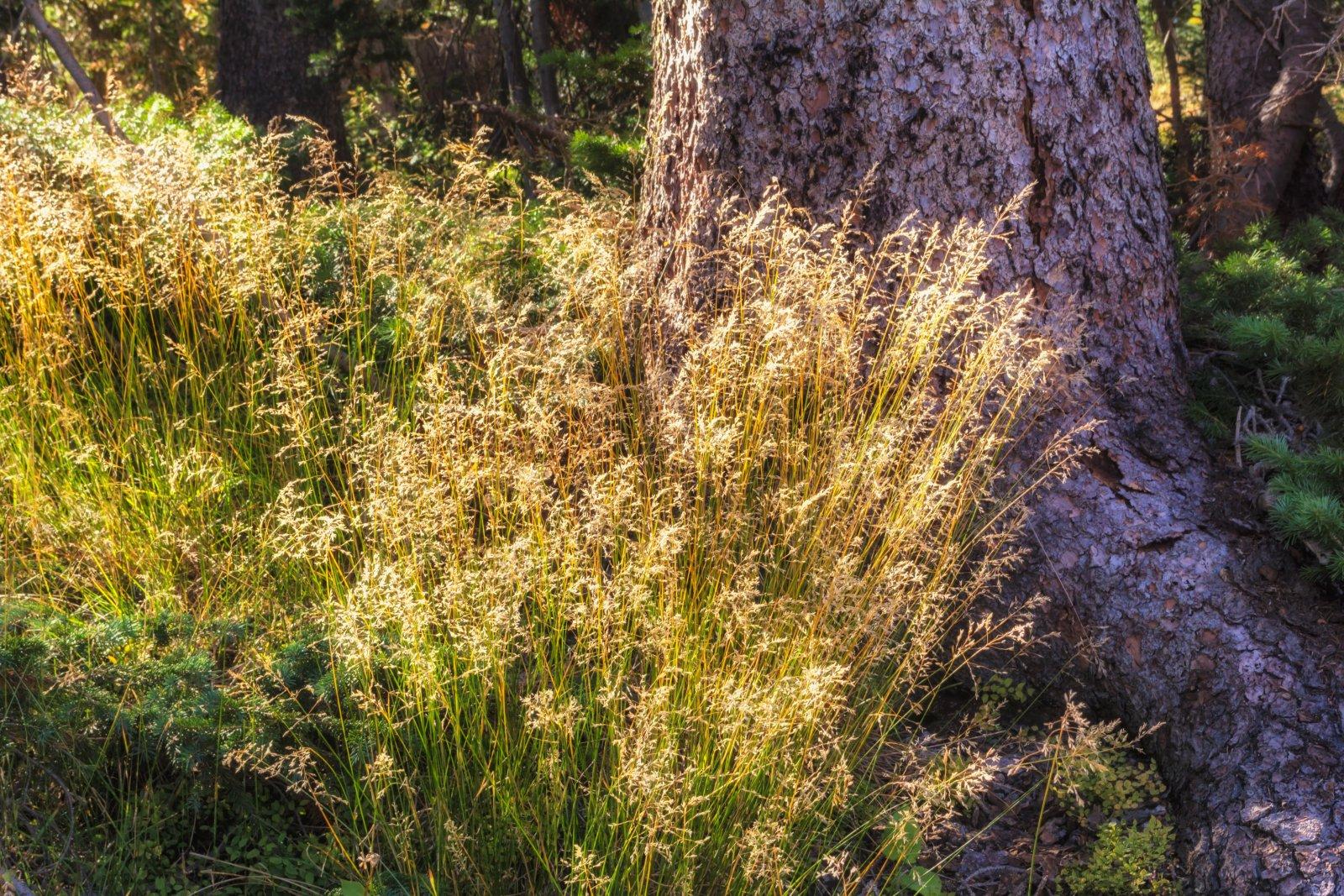 Naturalist Basin Loop 9-180588-sunlight.jpg