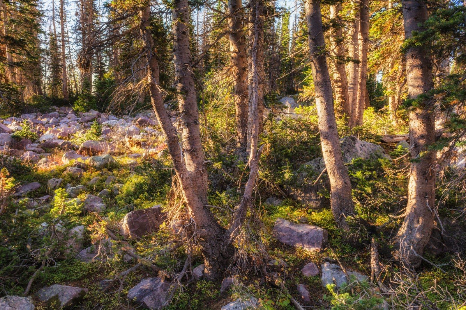 Naturalist Basin Loop 9-181193-sunlight.jpg