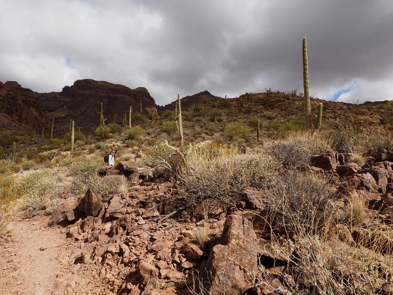 O10- little further on Bull Pastur trail-P2196568.jpg