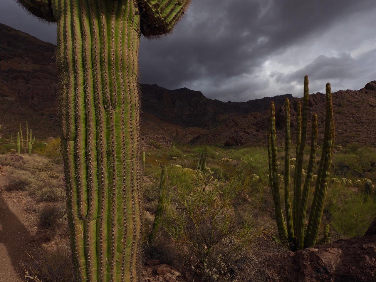 O37-dark clouds at Saguaros-P2196798.jpg