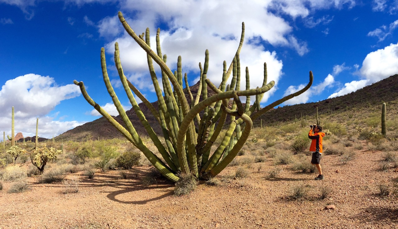 O5-Rick photographing the old Organ pipe cactus-IMG_9126.jpg