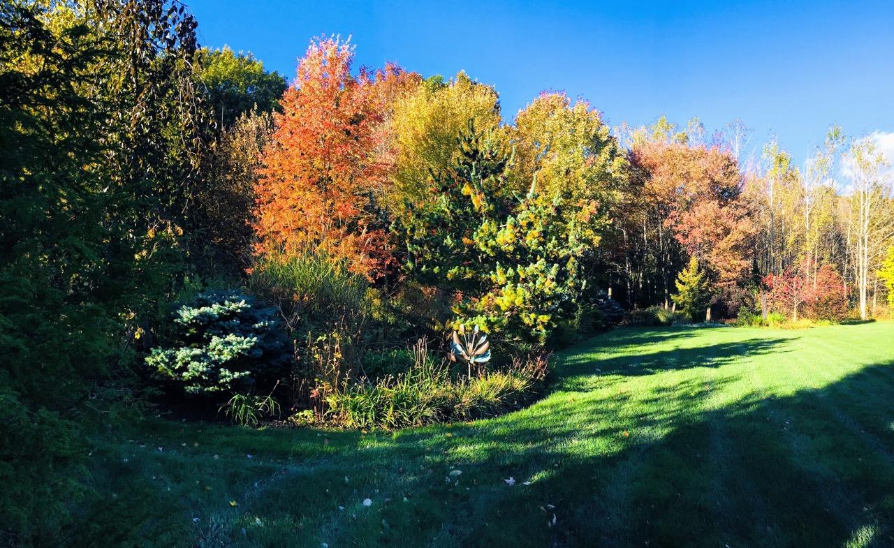 Oct21-yard-panorama--IMG_2308.jpg