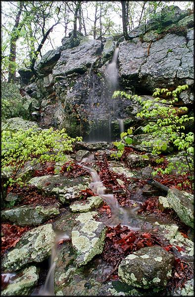 okmulgee-wildlife-preserve-002.jpg