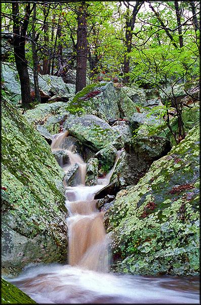 okmulgee-wildlife-preserve-004.jpg