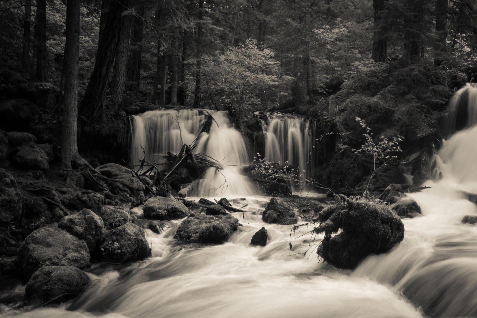 Oregon19-84.jpg