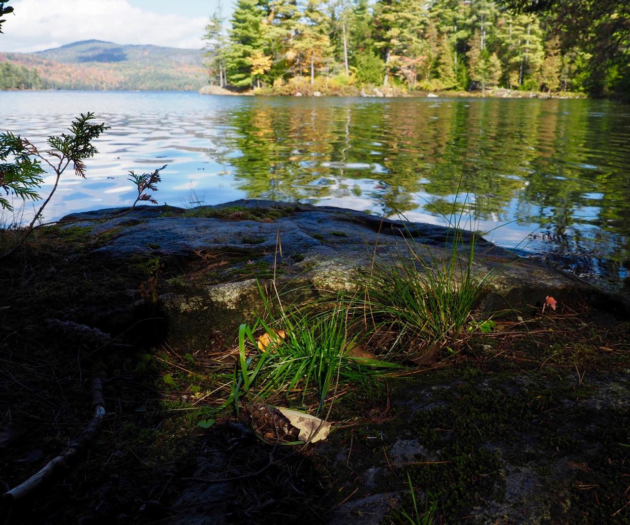 P21-close up grass at lake-PA100369.jpg