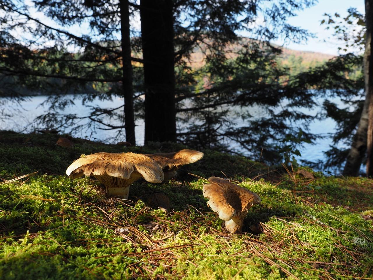 P22-mushrooms-close up at lake-PA100373.jpg