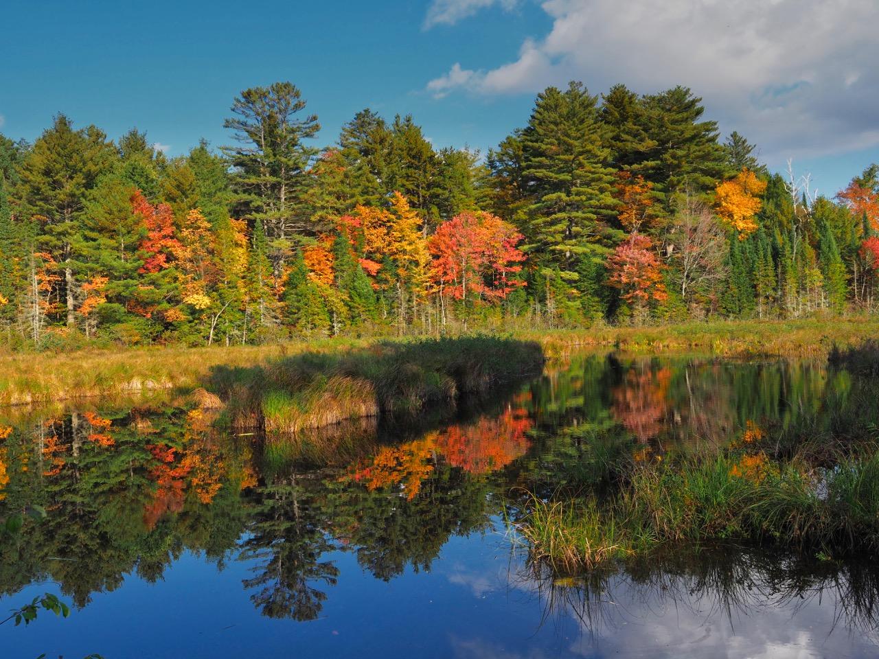 P39-closer reflection-pond-PA100559.jpg