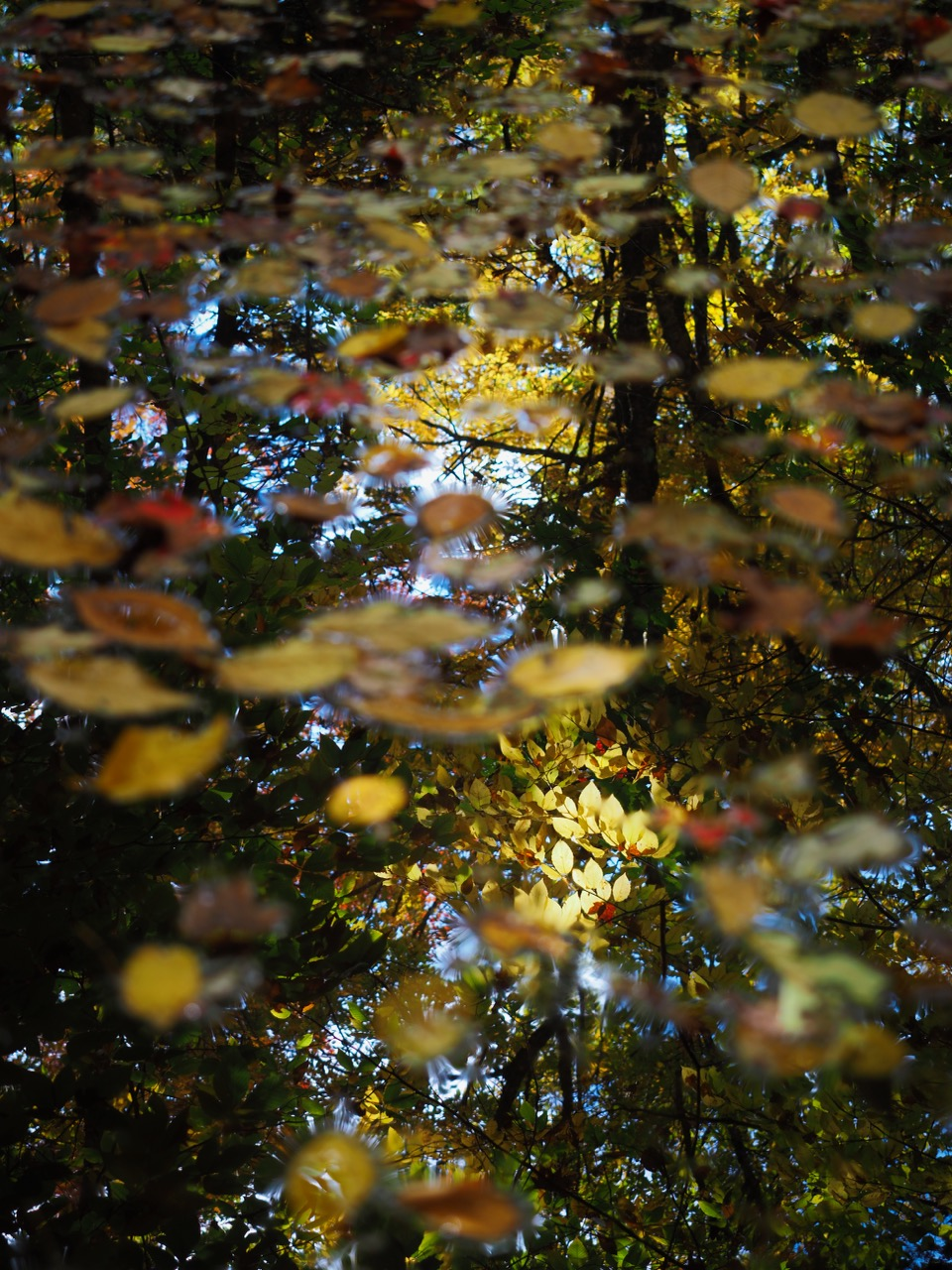 P5-Leaves reflected on water-PA100130.jpg