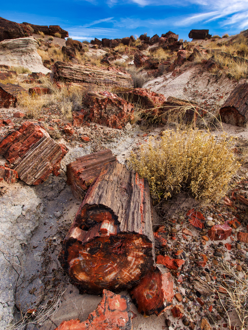 pf13-PB270534 Petrified Forest.jpg
