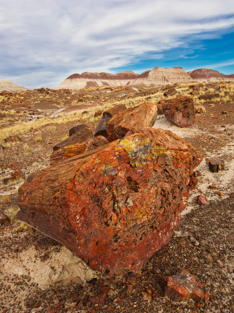 pf14-PB270560 Petrified Forest.jpg