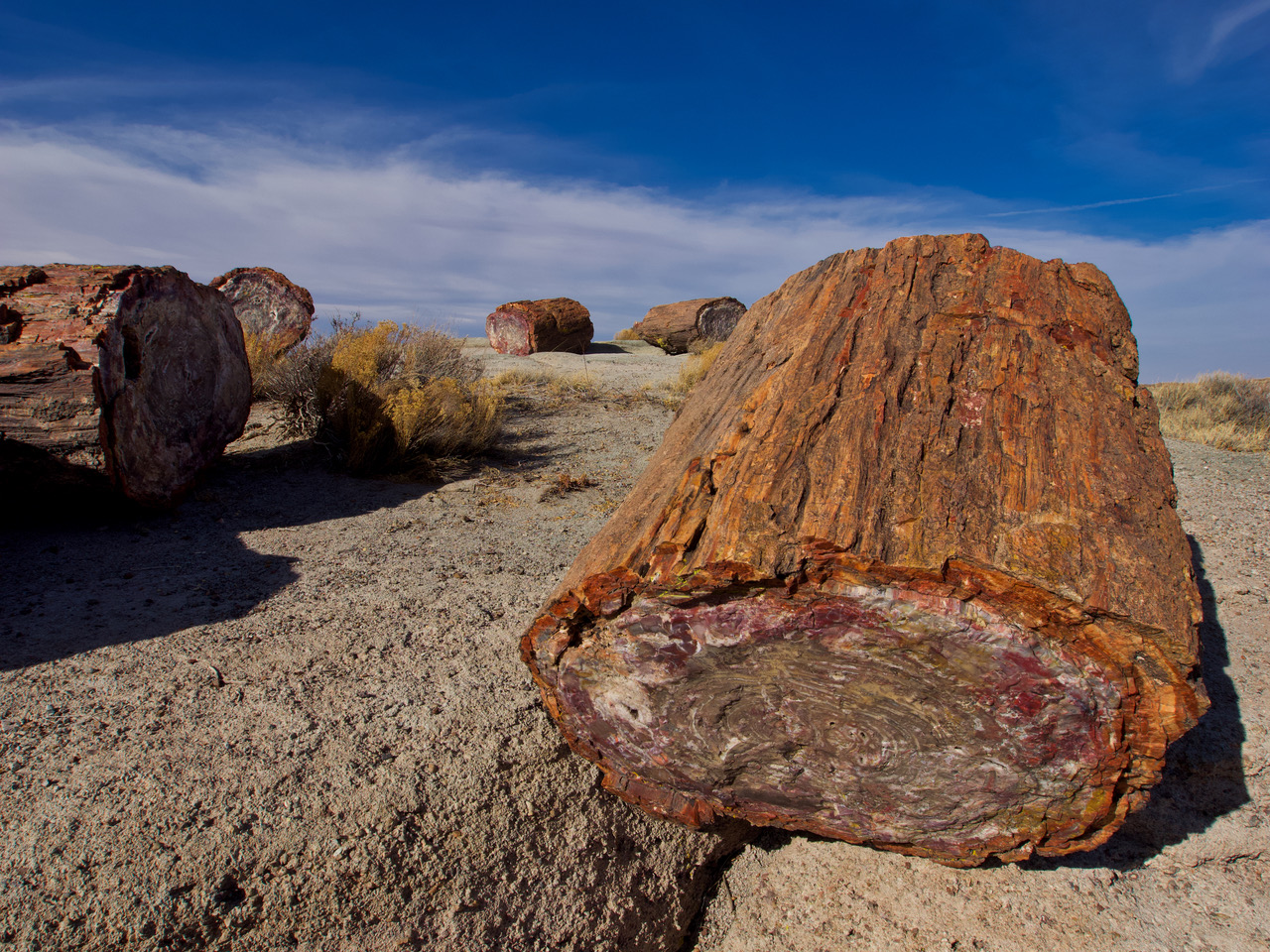 pf8-PB270392 Petrified Forest.jpg