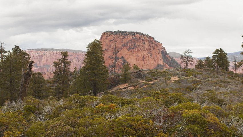 Red Butte.jpg