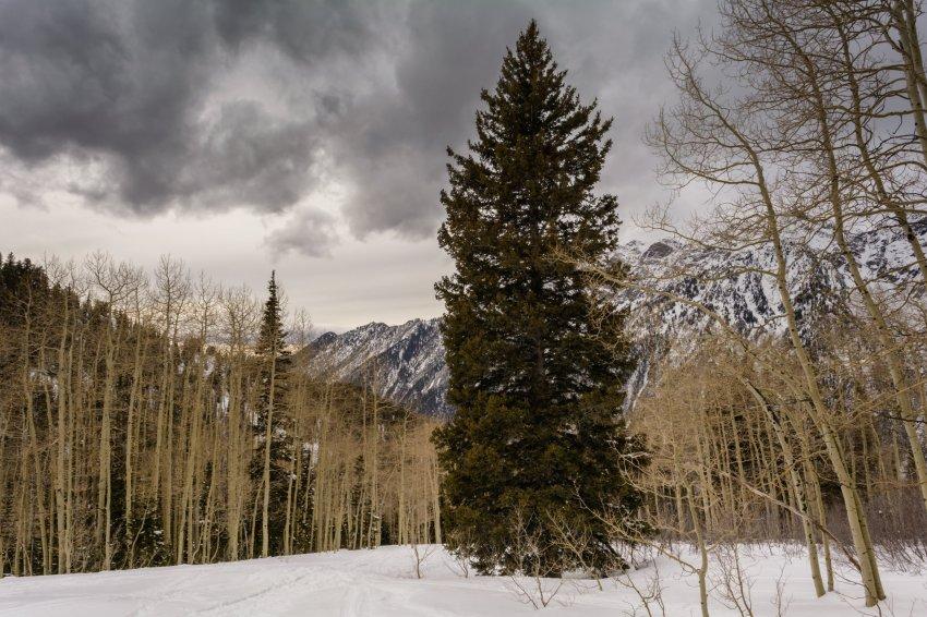 Red Pine 3-21-180012-proc.jpg