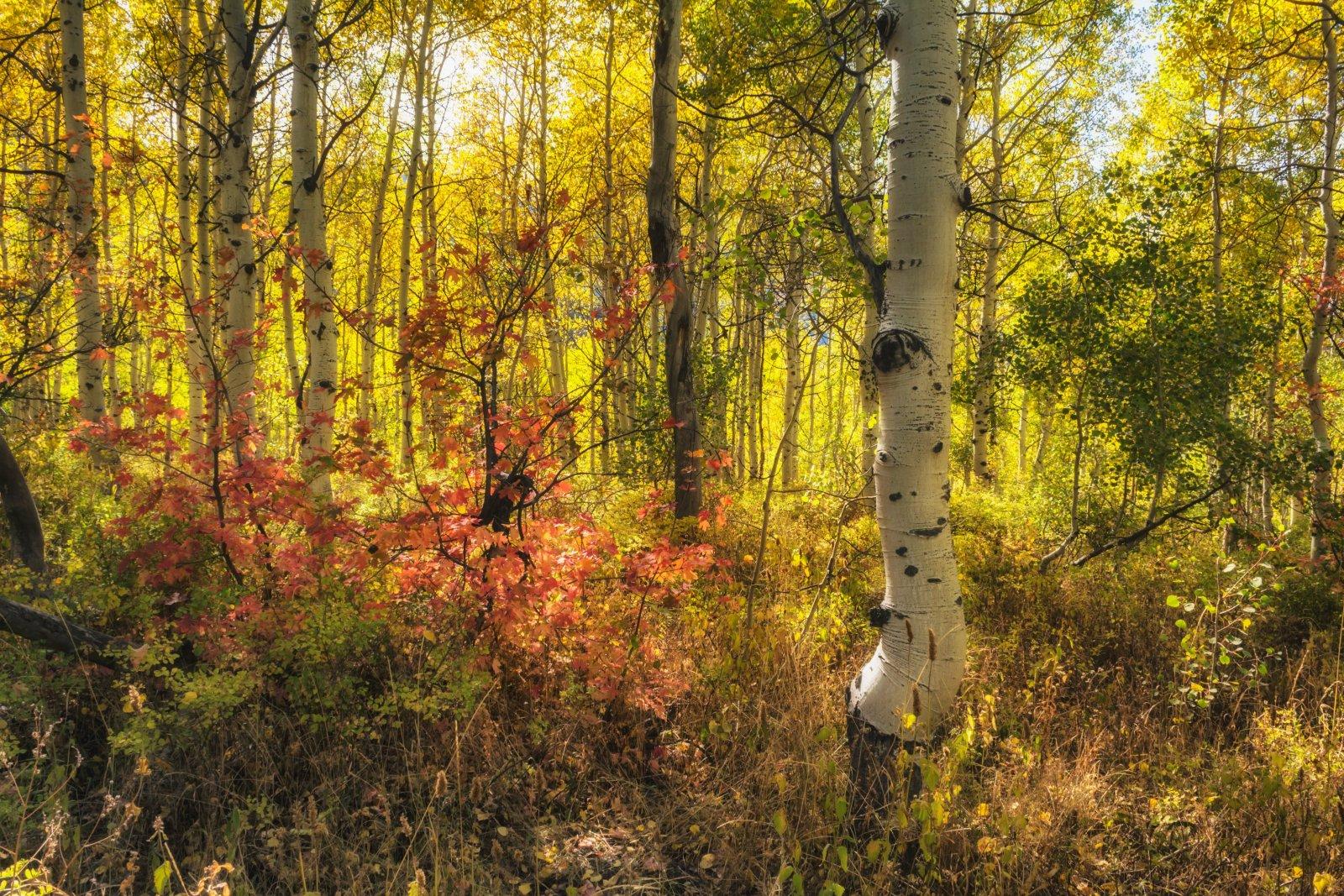 Ridge Autumn Leaves 9-20180035-recipe.jpg