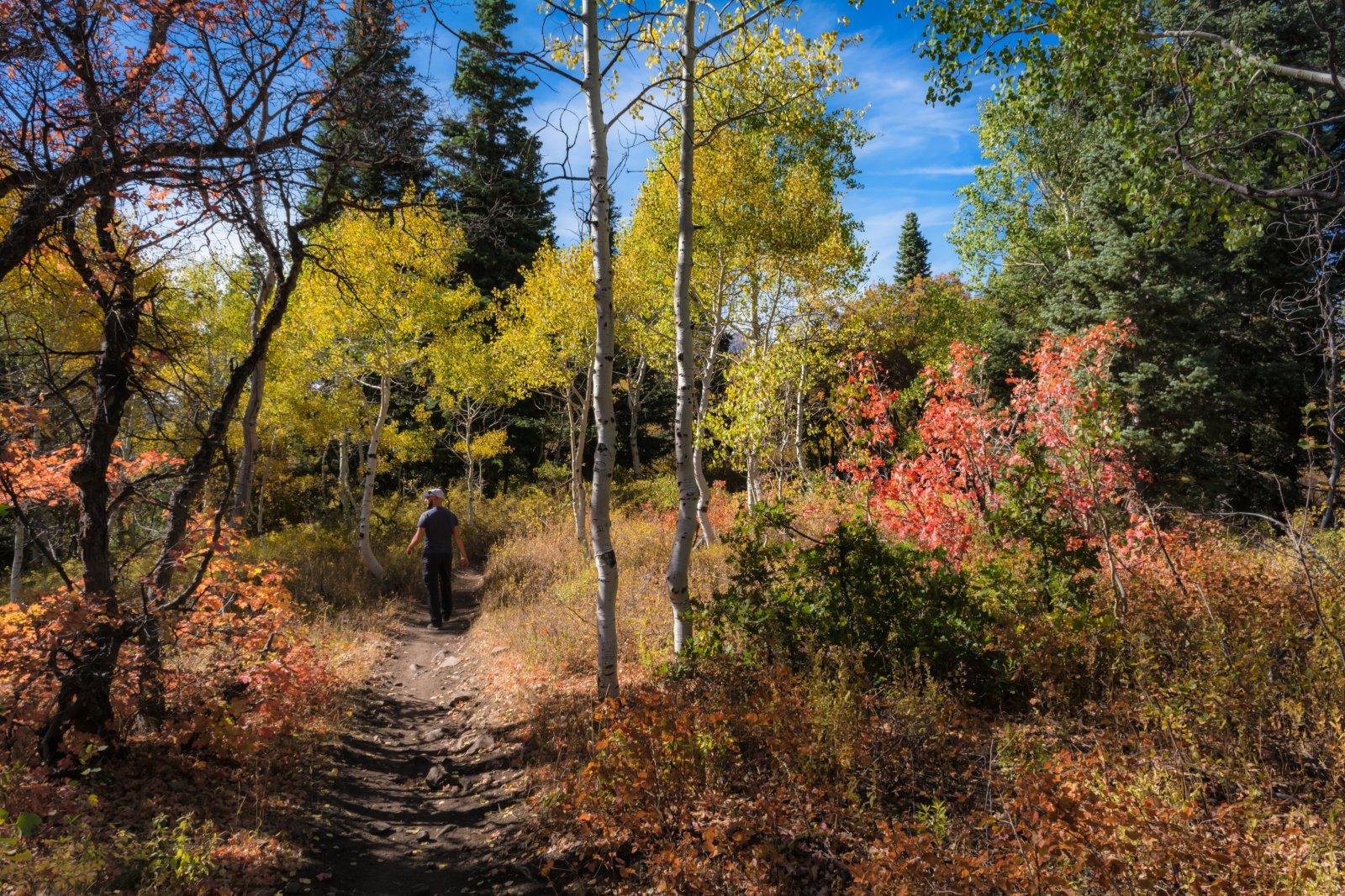 Ridge Autumn Leaves 9-20180049-proc.jpg