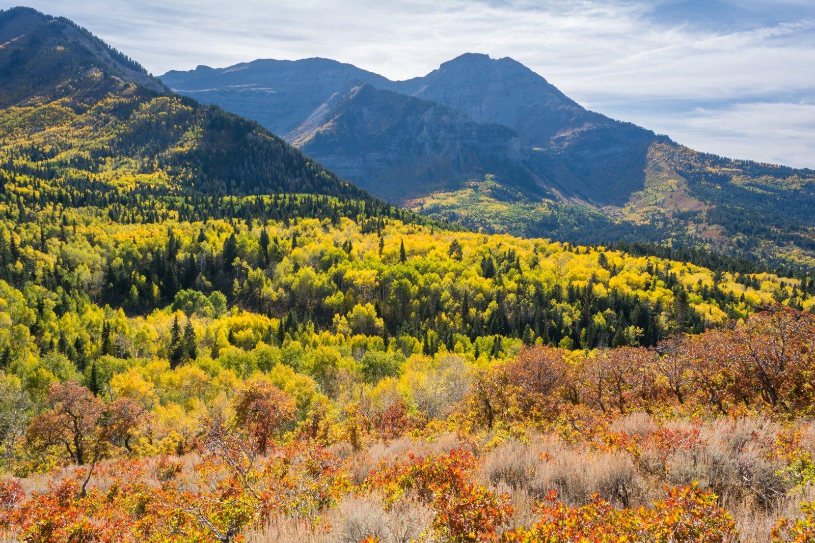 Ridge Autumn Leaves 9-20180070.jpg