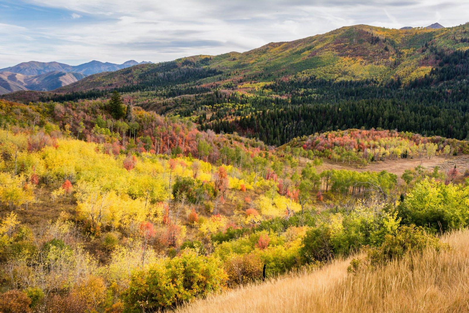 Ridge Autumn Leaves 9-20180222-proc.jpg