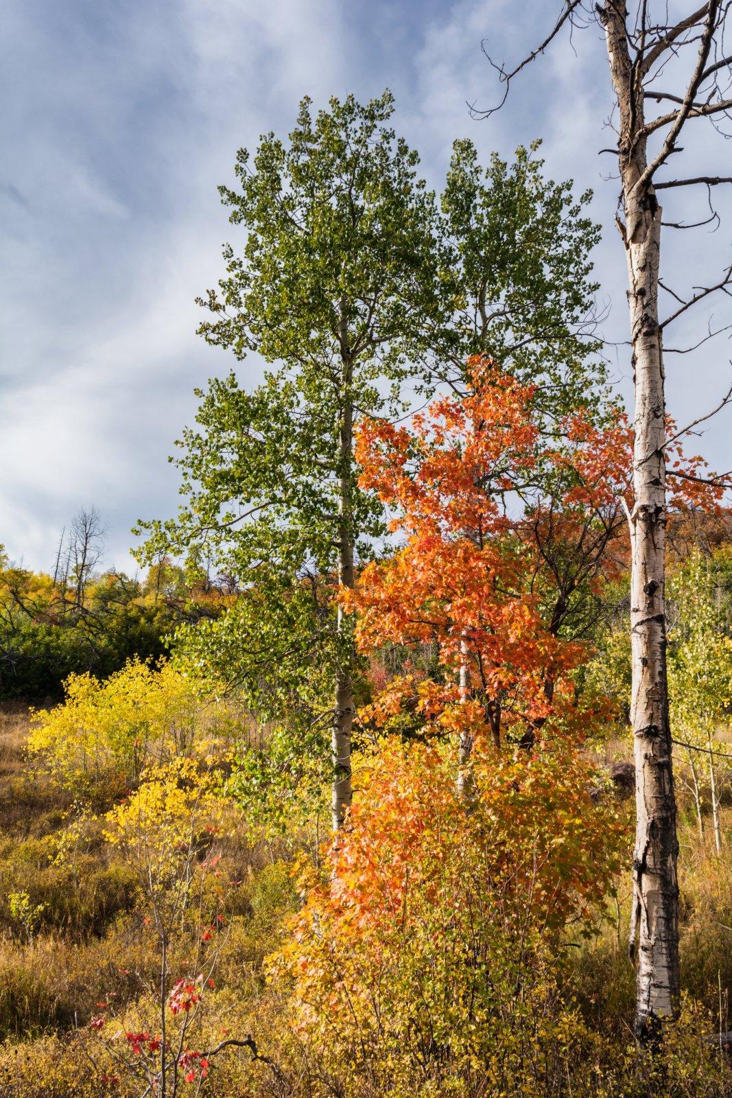 Ridge Autumn Leaves 9-20180274-proc.jpg