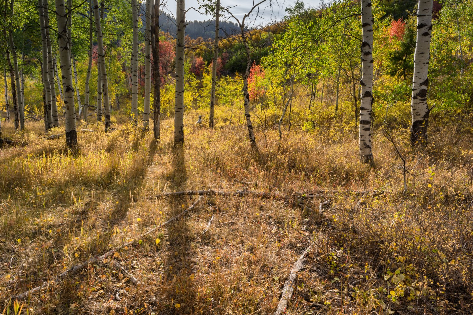 Ridge Autumn Leaves 9-20180311-proc.jpg
