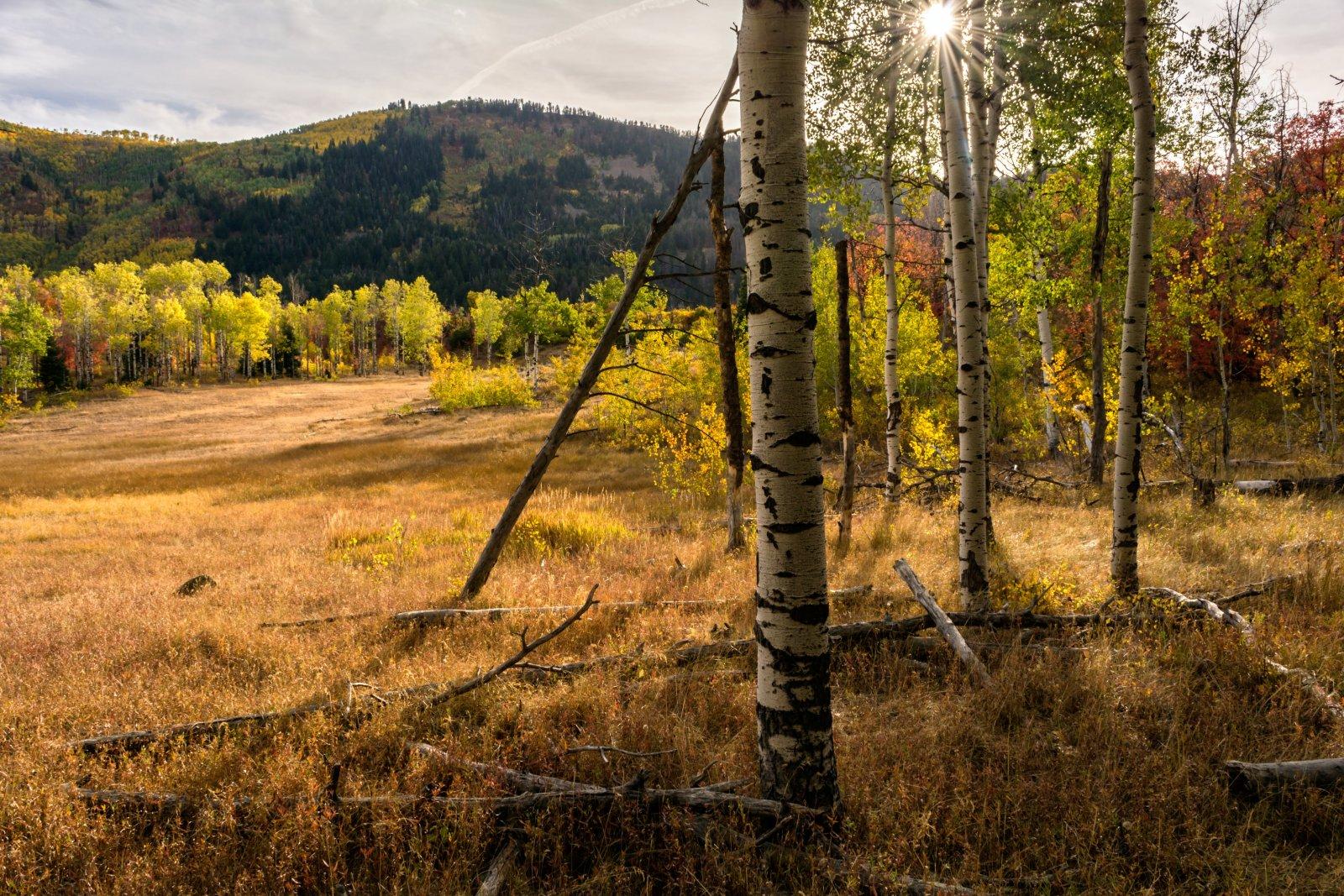 Ridge Autumn Leaves 9-20180316-proc.jpg