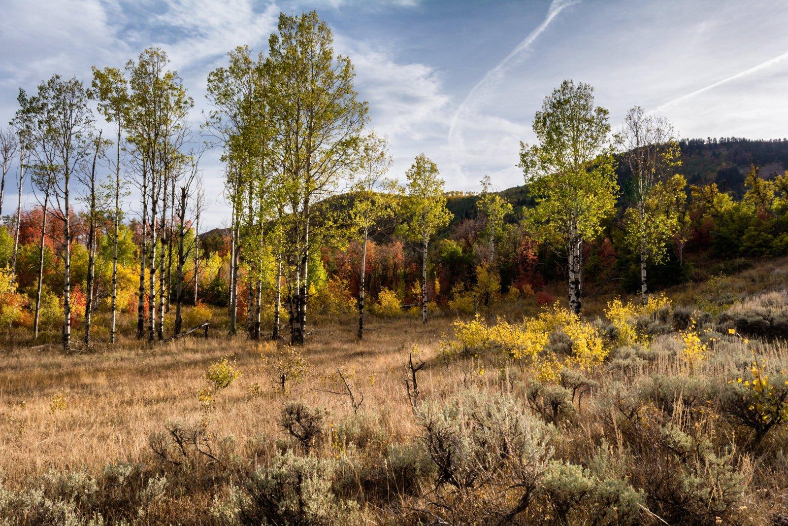 Ridge Autumn Leaves 9-20180372-proc.jpg