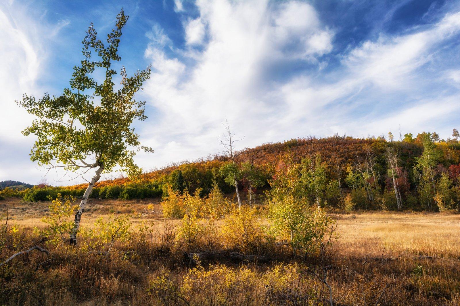 Ridge Autumn Leaves 9-20180468-recipe-sh.jpg