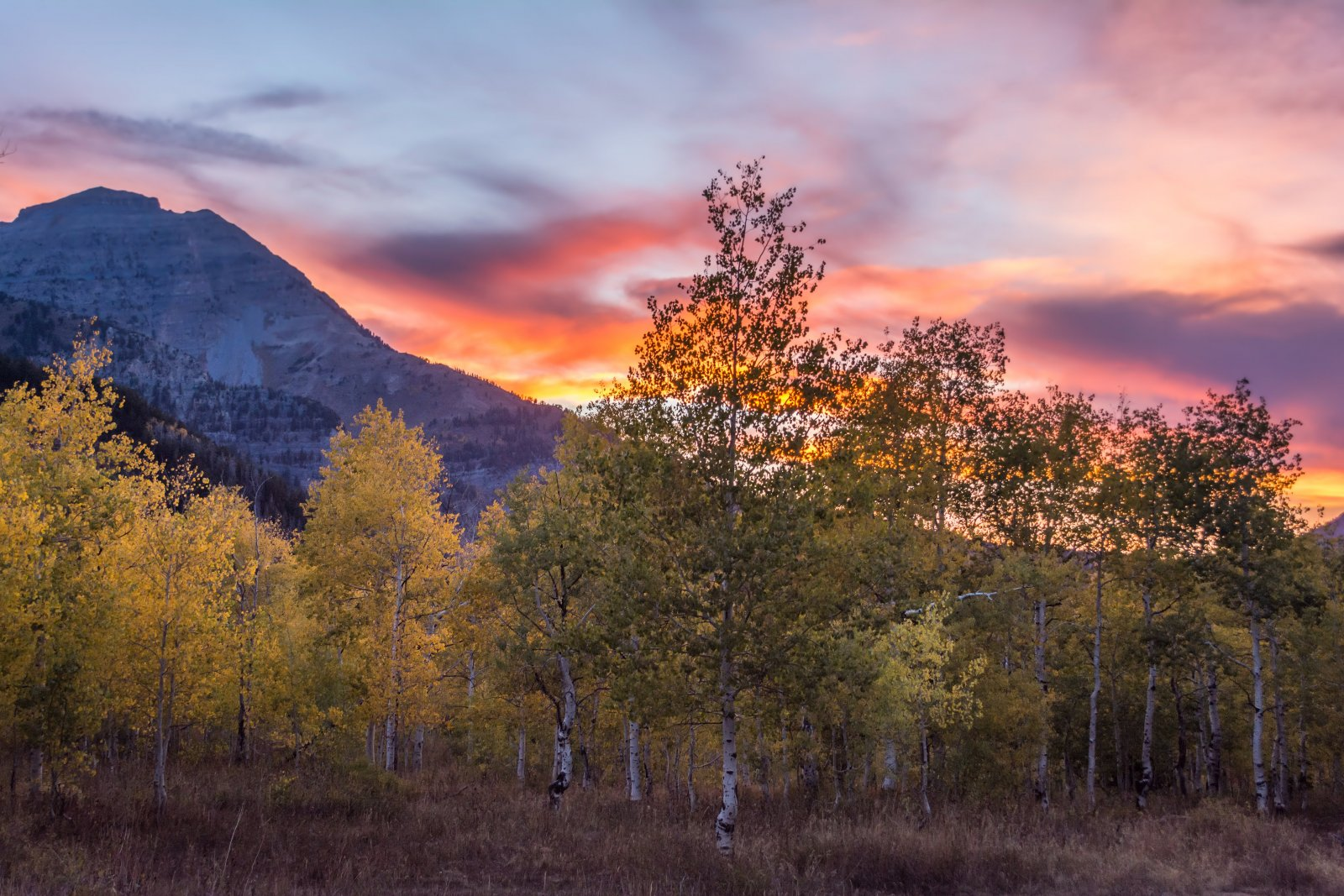 Ridge Autumn Leaves 9-20180605-noise.jpg