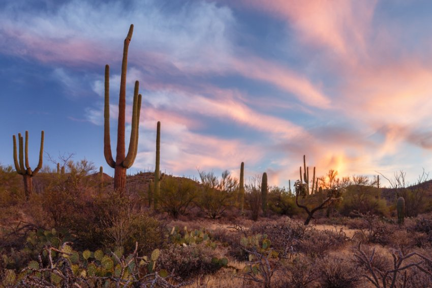 Saguaro and Clouds, Sunrise.jpg