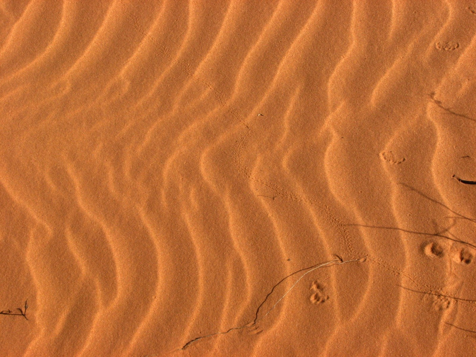 Sand Dunes 025.JPG