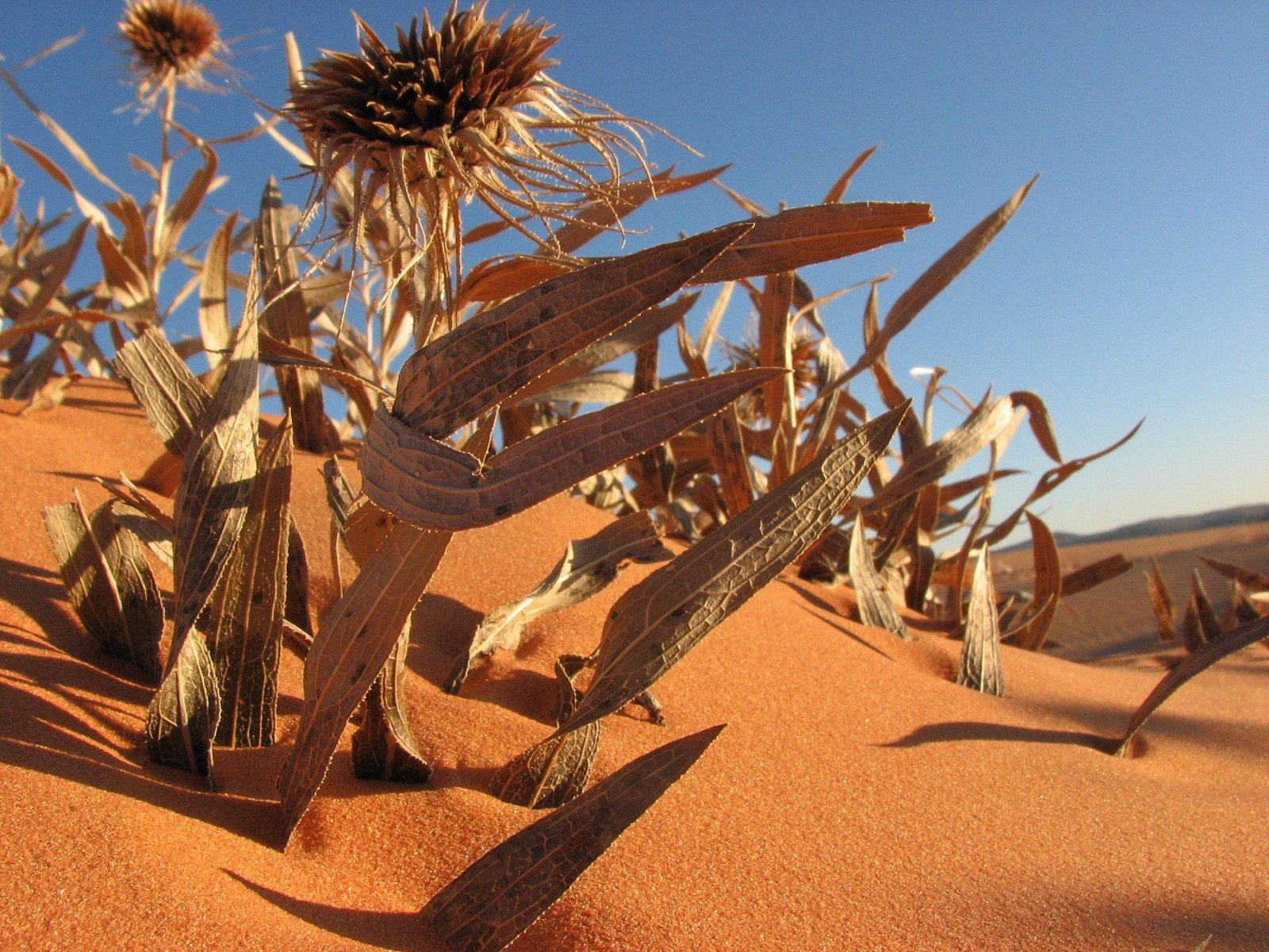 Sand Dunes 090.JPG