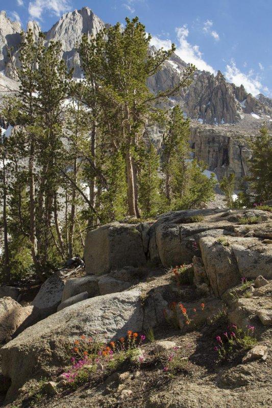Sierra Flowers.jpg