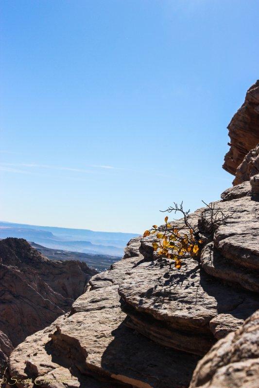 Snow Canyon Rim 005-5.jpg