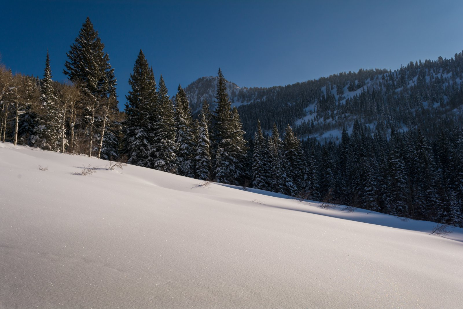 Snowshoeing With Ade0070-sm.jpg