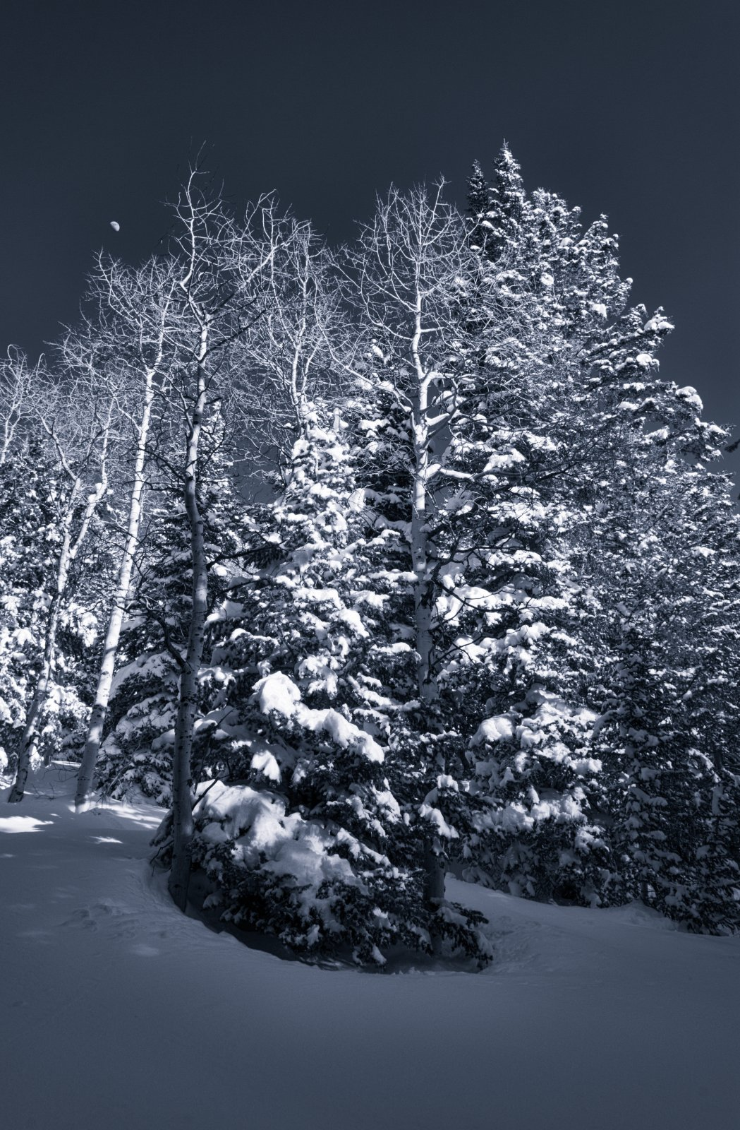 Snowshoeing With Ade0102-sm-bw.jpg