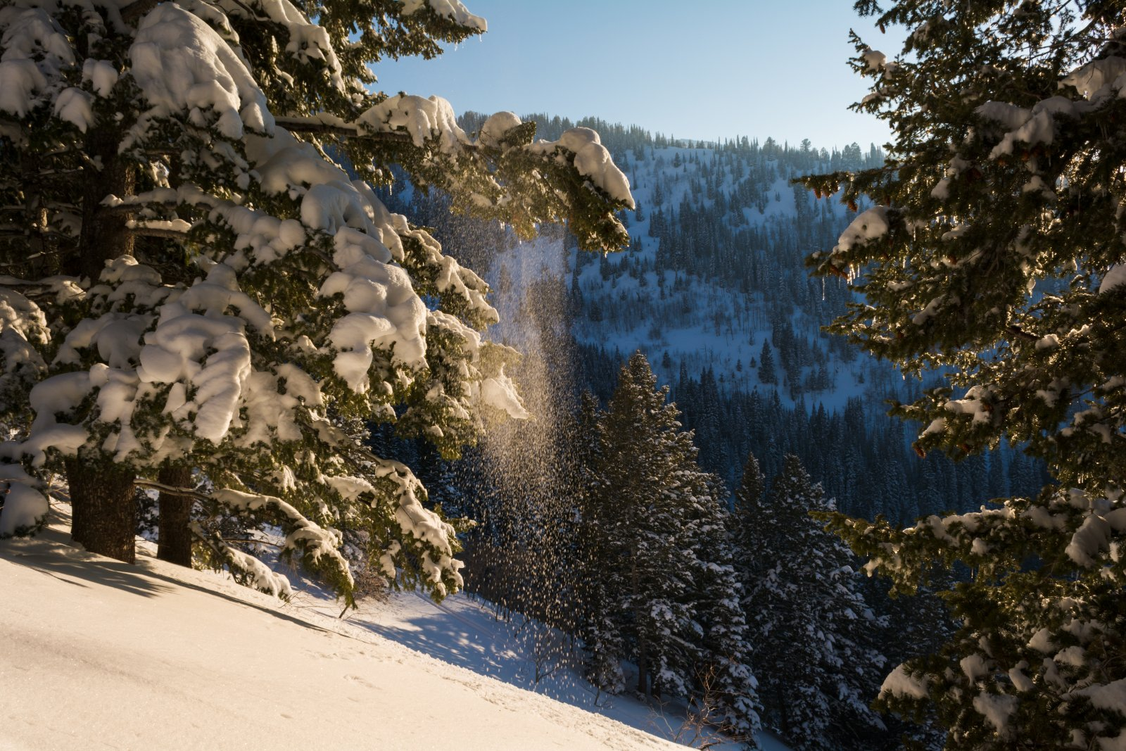 Snowshoeing With Ade0143-sm.jpg
